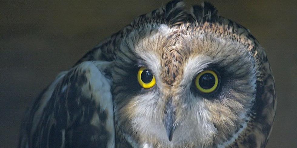 Owl Pellet Discussion