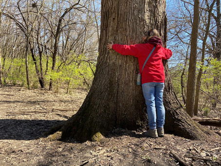 How Old Is That Tree? Learn How To Tell With Simple Math