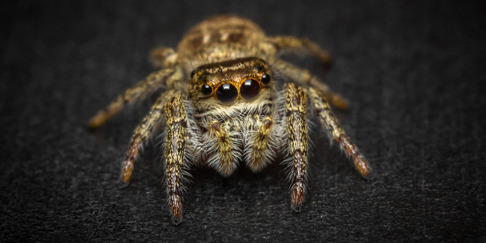 """Spider """"Sniffing"""" Hike"""