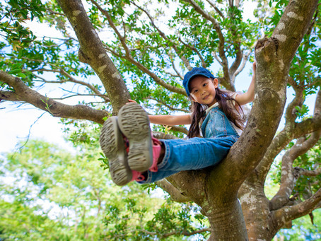 Climb On Up: Tips For Safe Tree Climbing