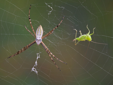 Spider Or Insect? What's The Difference Anyway?
