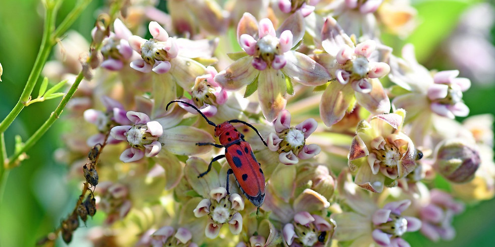 Nature Play Day: Insects