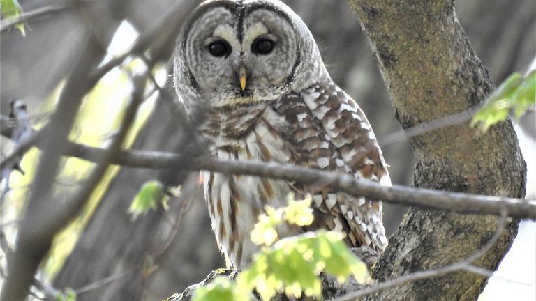 Family-Friendly Owl Prowl