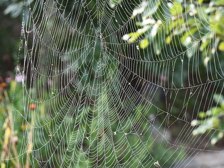 How Do Spiders Make Silk?