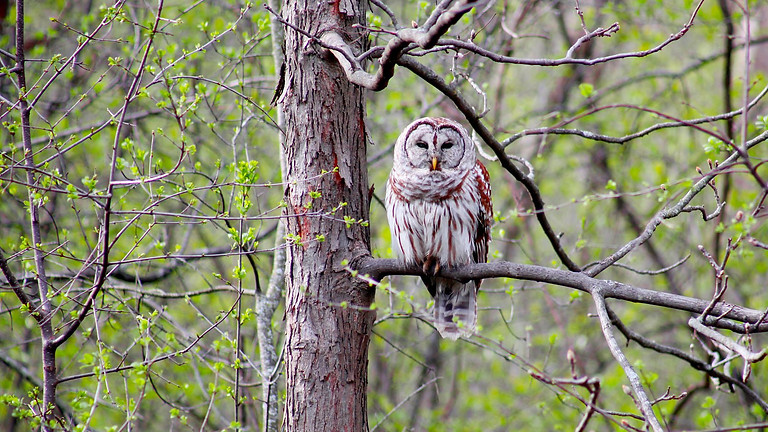 Nature Play Day: Owls