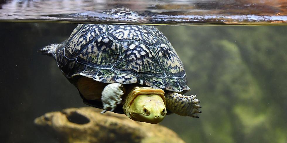Breakfast With the Turtles (Zoom webinar)