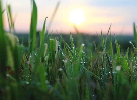 Wet Grass In the Morning Might Be From Dew Not Rain