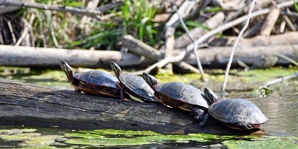 Nature Play Day: Turtle Fun