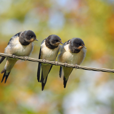 Why Can Birds Sit On Power Lines?