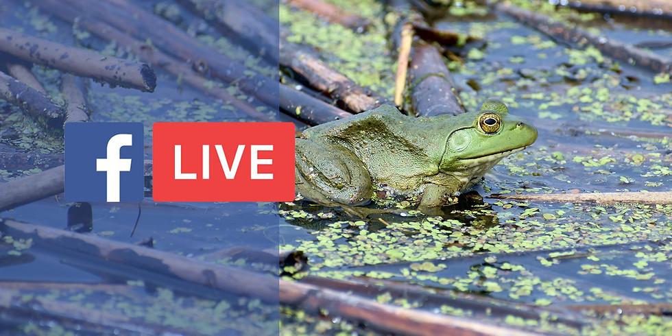 Pond Explorers Live!