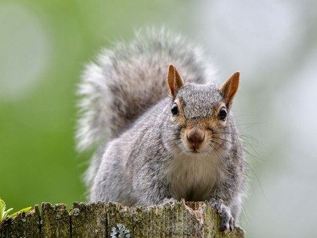 Are You As Squirrelly As A Squirrel?