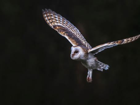 Go Owling Like a Pro