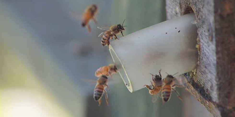Follow A Bee!