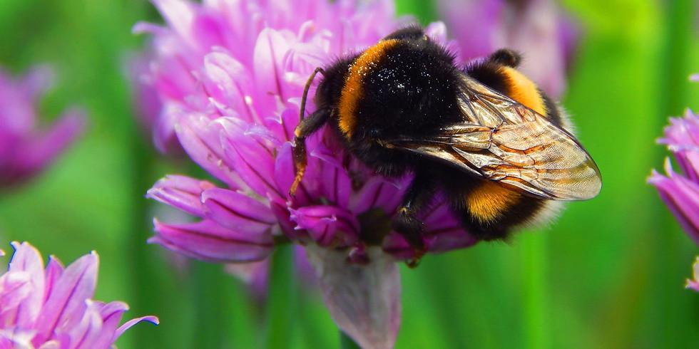 WonderKids: Bees (Zoom webinar)
