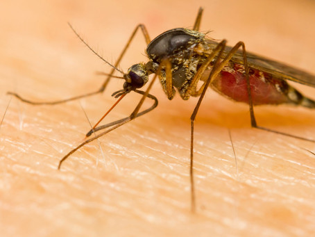 Why Do Mosquito Bites Itch?
