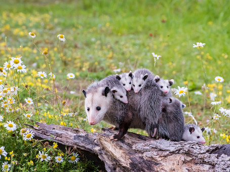 From Chucklings to Joeys, Baby Animal Names Are Too Cute