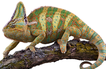 Reptile Pets