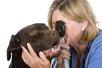 SKYLINE Animal Hospital Veterinary Eye Care