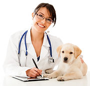 SKYLINE Animal Hospital Introduction