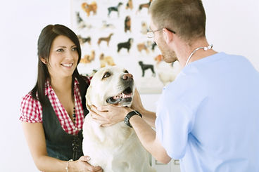 SKYLINE Animal Hospital Veterinary Services