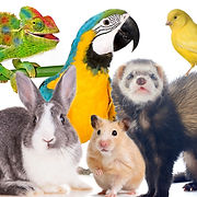 Exotic Pets