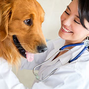 Enhancing Pet's Health with SKYLINE Animal Hospital