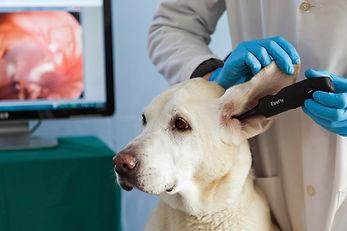 SKYLINE Animal Hospital Veterinary Video Otoscopy