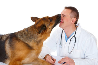 SKYLIN Animal Hospital Veterinary Cardiology