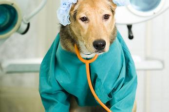 SKYLINE Animal Hospital Veterinary Surgery and Hospitalization