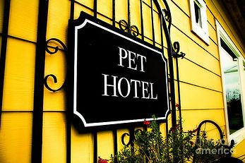 SKYLINE Animal Hospital Pet Hotel