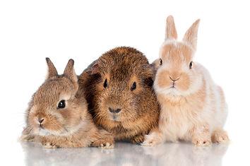 Rabbites and Ferrets