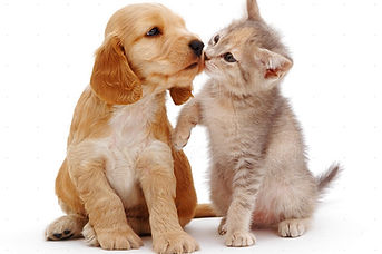 SKYLINE Animal Hospital Veterinary Puppy and Kitten Care