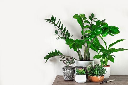 bigstock-Urban-Jungle-Concept-350038696.