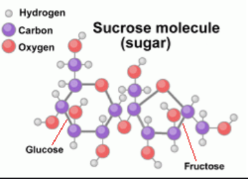 What exactly is sugar?
