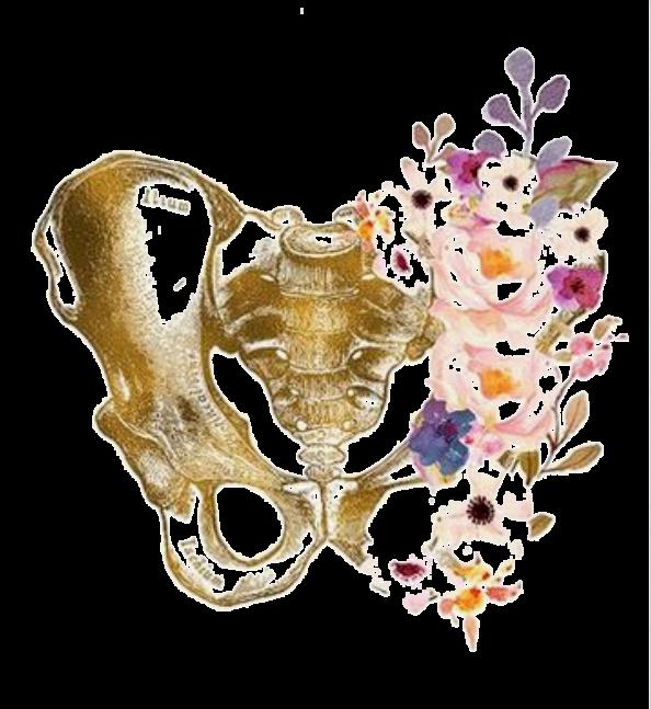 Pelvis illustration pelvic girdle pain in prenatal yoga