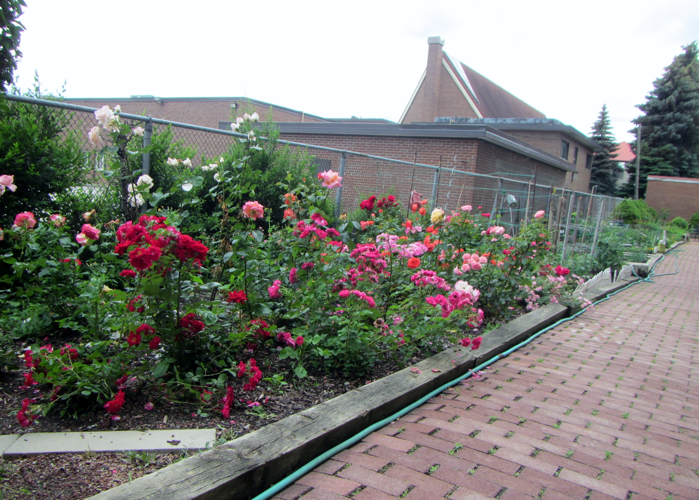 Rose garden and community farm