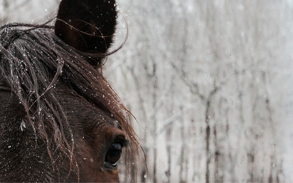 Horse_edited_edited_edited.png