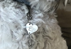 """Doggie Bling....Introducing: """"The Poochie Pendant"""""""