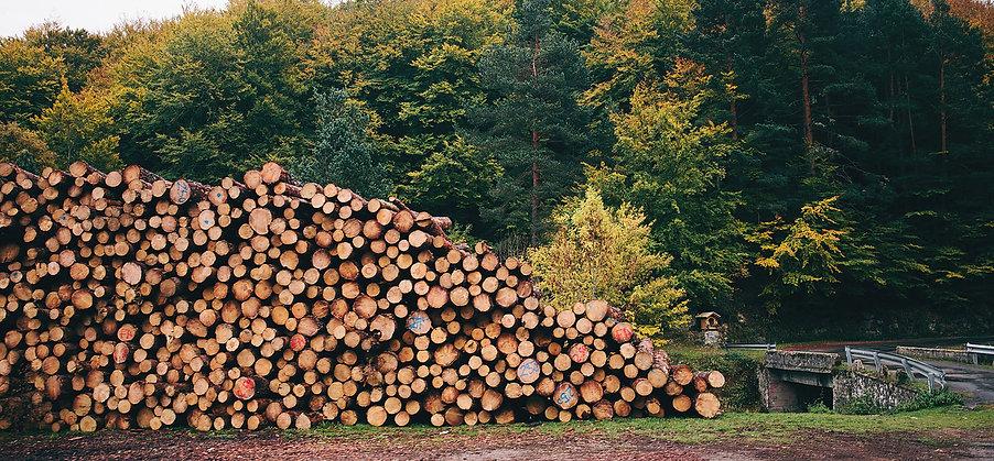 Timber Certification (Newsletter).jpg