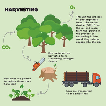 Tree Educational Diagram-01.jpg