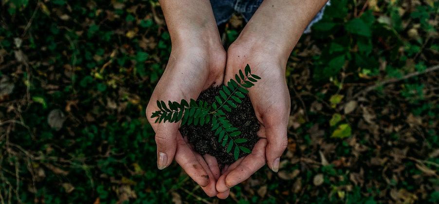 Plant a tree (newsletter).jpg