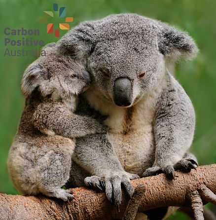 Carbon Positive Australia.jpg