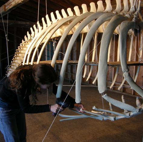 Orca ribs in progress