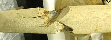 Damaged Bone.jpg