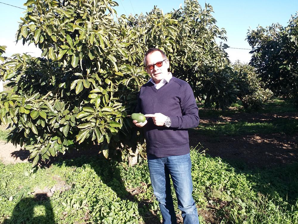Oliver Huesmann Avocado Fruitconsulting