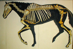 Horse-on-a-half-shell