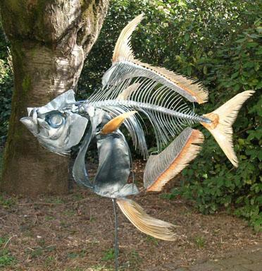 Opah Fish (Lampris guttatus)