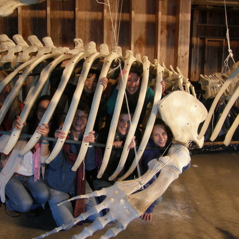 Most of the whale skeleton building crew inside one gray whale.
