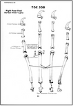 Sea Otter Skeleton Foot Bones Page