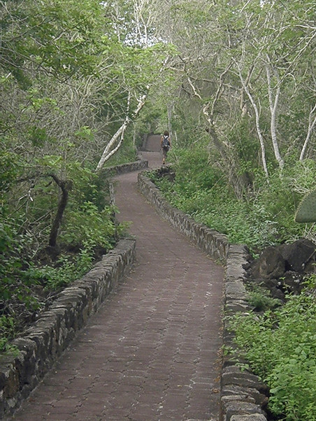 The trail through the forest to the beach, two kilometers. A fantastic nature walk.